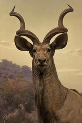 Kudu (A. Zada) Tags: life stilllife ny newyork nature animal animals museum fauna dead real death wildlife horns artificial exhibit taxidermy antelope alive preserved amnh museumofnaturalhistory exhibits deadoralive americanmuseumofnaturalhistory kudu zada deadandalive azada arielrahimzada