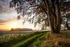 Autumn sunrise (Stuart Stevenson) Tags: uk autumn trees sky sun mist texture grass sunrise fence landscape outdoors photography scotland frost natural tracks sunburst colourful lanark clydevalley startoftheday anewbeginning canon1740mm canon5dmkii stuartstevenson thanksforbviewing â©stuartstevenson