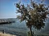 lo pagan (chemakayser) Tags: sea summer españa costa naturaleza tree beach arbol mar mediterraneo playa salinas murcia pasarela verano marmenor lopagan