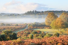 Autumn at Burley, The New Forest (Stu Meech) Tags: new autumn mist forest sunrise lens landscape nikon long hard lee filters grad 70200 f28 d610 06nd