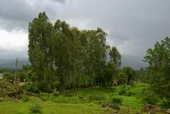 Crown of Trees (VinayakH) Tags: india green pass scenic maharashtra pune westernghats mountainpass ghats mahad bhor varandhaghat