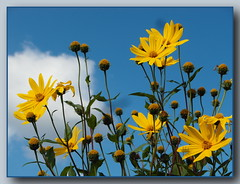 Blumen ... wollen hoch hinaus ... (Kindergartenkinder) Tags: blumen kindergartenkinder