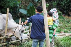 39 (Garry Andrew Lotulung) Tags: street portrait bw monochrome canon children indonesia cow blackwhite child muslim islam religion goat oldman human kambing adha humaninterest sapi tangerang idul eidmubarak iduladha canon7d