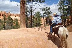 P9080425 (bluegrass0839) Tags: canyon national hoodoo bryce zion zionnationalpark brycecanyon nationalparks narrows hoodoos horsebackride parkthe