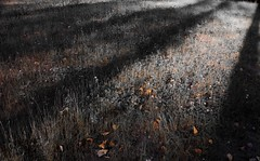 Autumn Waits (Philip Lo Photography) Tags: autumn trees light shadow fall contrast ominous creepy unsettling