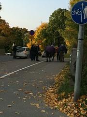 IMG_5133 (ekurvine) Tags: horses horse hevonen
