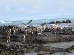 Galápagos - Isabela-113