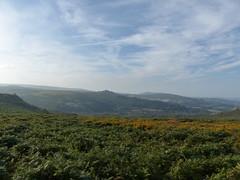 P1010346 (jrcollman) Tags: plants places devon dartmoor houndtor ulexgallii pplant pteridiumaquilinumbracken haytortohoundtor