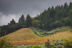 Dry Creek Fall Color #6 (Tom Moyer Photography) Tags: california vineyard vines sonomacounty winecountry drycreekvalley