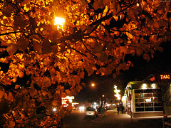 "Neon Signs - Trees on Colfax at Night • <a style=""font-size:0.8em;"" href=""http://www.flickr.com/photos/34843984@N07/15360112129/"" target=""_blank"">View on Flickr</a>"