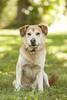 Hanging Out [week 3] (miss_n_arrow) Tags: portrait dog happy juneau week huskador