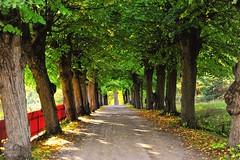 Autumn Avenue (nikkorglass) Tags: autumn avenue höst 2470 allé nyckelviken