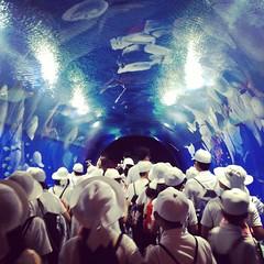 You must swim through a school of Japanese schoolchildren to enter the #Osaka #aquarium