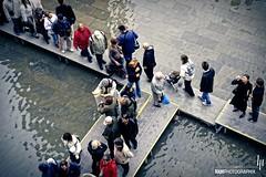 Tourist path (hapePHOTOGRAPHIX) Tags: italien venice italy nikon italia flood pigeon dove paloma f80 taube venezia venedig piazzasanmarco aquaalta hochwasser markusplatz columbidae inundacin plazadesanmarcos hapephotographix 380ven 380ita 380aqa 999str 999sld