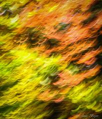 La danse des feuilles (josboyer) Tags: de lest cantons sepaq parcdumontorford