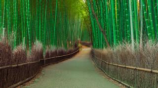 Path into Arashiyama's Bamboo Grove [updated]