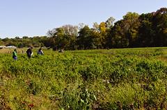 DSC_0823 (joeypedras) Tags: flowers autumn fall apple 35mm nikon pumpkins farms picking alstede d5100