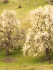 "dreamy Spring in Australia • <a style=""font-size:0.8em;"" href=""http://www.flickr.com/photos/44919156@N00/15456367252/"" target=""_blank"">View on Flickr</a>"
