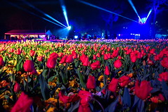 Spotlights (evangelique) Tags: park flowers color colour festival botanical lights spring tulips canberra commonwealth act floriade 2014 nightfest