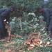 AATF-Cassava1