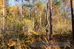 Repovesi_IMG_1754 (Holtsun napsut) Tags: park summer nature trekking finland landscape outdoors europe hiking national maisema kesä repovesi patikointi