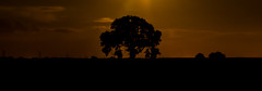 Lonely tree (jadenpadleyphotography) Tags: sky tree night doncaster southyorkshire thorne