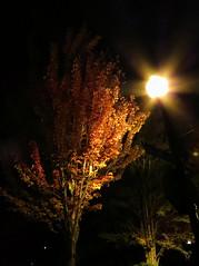 Street Light Tree (maytag97) Tags: tree night streetlight fallcolor streetlamp nightsky maytag97