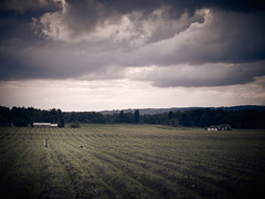 After the harvest (StephenCaissiePhoto) Tags: sky ontario mamiya weather birds clouds rural dark evening geese moody perspective harvest farmland rows desaturated vignette fallow shallowdof phaseone p30 captureone