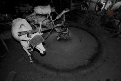 Oil processing by Live stock (HamimCHOWDHURY  [Active 01 Feb 2016 ]) Tags: canon eos cow dhaka goodshot gitzo 70200mmf28lisusm 1224mmsigma 1116mmtokina hamimchowdhury 50mmprimef12lusm novoflesballhead dhanmodni handalahamim hddc120141016masteredoilprocessing hatthisstillexist