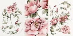 Autumnal Rose_780 (Elena Limkina) Tags: flowers floral rose illustration watercolor botanical details autumnal limkina