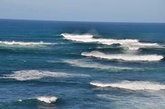 DSC_7033 (Tim Beach) Tags: great ocean road melbourne victoria australia port fairy twelve 12 apostles princetown apollo bay beach sea water bird animal