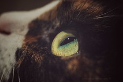 Sony a7 50mm 1.8 (Jasrmcf) Tags: ilce7 sel50f18f sonya7 sony sonyalpha alpha fullframe eye cat cats catseye bokeh bokehlicious bokehgraph dof detail animal pet fur macro sonymacro macrotube greatphotographers ngc smooth blur