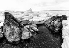 Ice and Rocks (Karen_Chappell) Tags: topsail beach cbs ice seaice sea ocean spring nfld newfoundland avalonpeninsula atlanticcanada canada atlantic bw blackandwhite cold frozen icy packice weather canonefs1022mm wideangle
