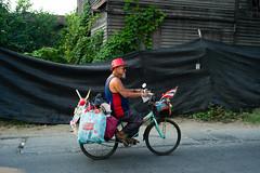 Cycling uncle - Chiang Rai - Thailand (waex99) Tags: 2017 feb leica m262 travel asia chaing chaingai chiangmai holidays mai rai rangefinder thailand