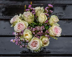 Roses and rain (evaeblonski) Tags: