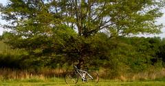 Today's Ride - Apr 11 2017 (Reid2008) Tags: trek trek7000 bicycle bicyclefriendly kenwoodpark