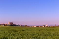 Primavera...que te quiero ❤️❤️❤️❤️ (Lady_Nessa) Tags: agricultura siembra sunset atardecer naturaleza tractor primavera