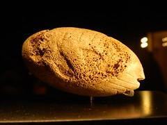 Relief of a mammoth, Museum of the University of Tübingen (jrockdrigo) Tags: musemderuniversität mut universitättübingen eberhardkarlsuniversitattübingen museumoftheuniversityoftübingen originsofart museumofancientcultures tübingen orígenesdelarte universidaddetubinga museodelasculturasantiguas vogelherd vogelherdcave vogelherdhöhle germany alemania deutschland bone knochen hueso mammothrelief mammutrelief relievedemamut