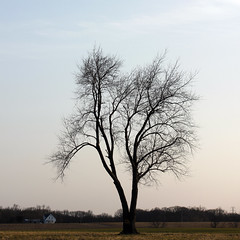 Against the Pale Spring Sky 03232017 (Orange Barn) Tags: tree silhouette sky sunset barebranches baretrees palesky 100xthe2017edition 100x2017 image24100