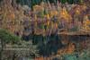 Tummel Autumn (Shuggie!!) Tags: autumn forest hdr landscape lochtummel morninglight perthshire reflections scotland shoreline trees zenfolio karl williams karlwilliams