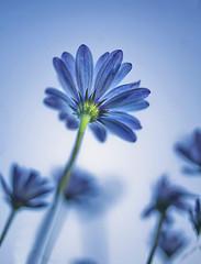 Hope Springs (The Canon Fanboy) Tags: hope morning bokeh beyondbokeh india flower positive energy delhi asia bobby roy