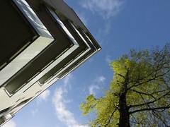 Springtime (Ed Sax) Tags: suicide spring springen fallen falling haus dach hochhaus baum frühling hamburg edsax poppenbüttel birke fluchtpunkt