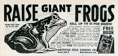 Raise Giant Frogs (kevin63) Tags: lightner photo women kitsch bitsch facebook old vintage pictures advertisement magazine blackandwhite giant frogs raise free book americanfrogcanning neworleans dozen future canned legs