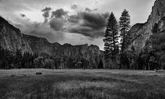Late Afternoon Clouds over Yosemite Valley (Black & White) (thor_mark ) Tags: blackwhite capturenx2edited cathedralrocks cathedralspires centralyosemitesierra clouds colorefexpro day3 grassymeadow hillsideoftrees lookingsw mountains mountainsindistance mountainsoffindistance mountainside nature nikond800e overcast pacificranges portfolio project365 sierranevada silverefexpro2 trees triptopasoroblesandyosemite yosemitenationalpark yosemitevalley yosemiterittersierranevada ca unitedstates