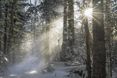 Star Dust (Portraits of Nature) Tags: outdoors sun light glitter snow rays forest winter nature trees