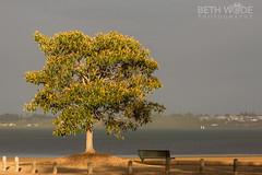 The Morning Light (Beth Wode Photography) Tags: wellingtonpoint redlands tree morninglight beth wode bethwode