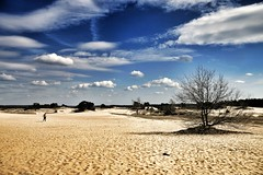 Alone on the sandplain. (wimkappers) Tags: alone desert dutch dutchlandscape sands