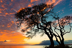 gorgeous hawaiian sunset (Sam Scholes) Tags: shadow beautiful colorful maui sunset travel wonderful silhouette shadowed tree seascape vacation hawaii landscape sea