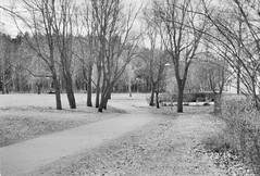 trees on the grass (Mister.Marken) Tags: nikonmf22 databack dateback nikkoraf3580mm 400tx kodaktrix400 nikonf4 sweden madeinsweden blackandwhite