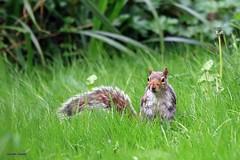 J78A0113 (M0JRA) Tags: rspb oldmoor birds lakes woods walks trees ponds fields grass hedges foot paths